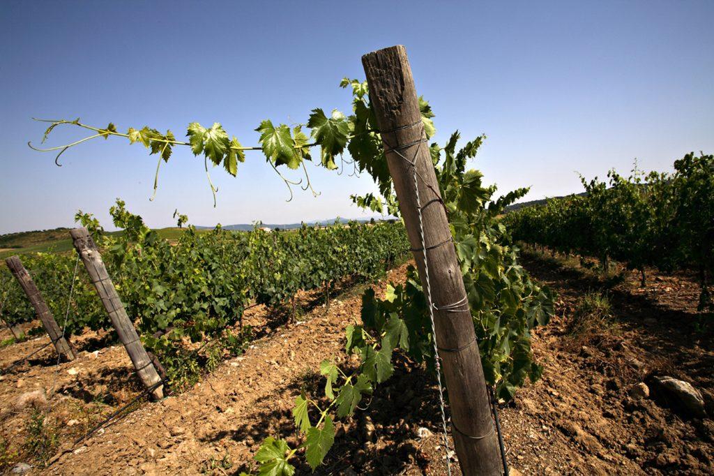 fertuna vineyards