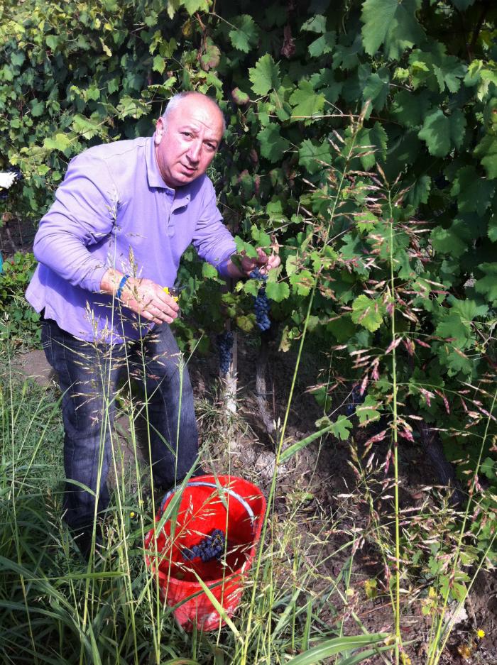 Pasquale - Importers of Italian wine