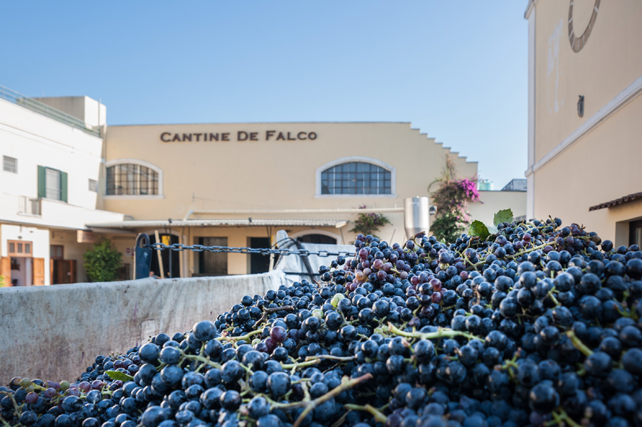 Prestigious awards obtained this year by the Cantine De Falco winery